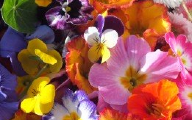 Mixed Edible flowers from Maddocks Farm Organics