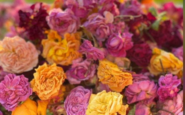 Buy whole dried edible roses