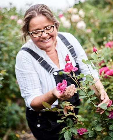 Buy organic edible roses.