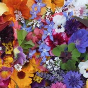 Buy seasonal edible flowers