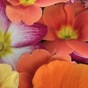 May Edible Flowers