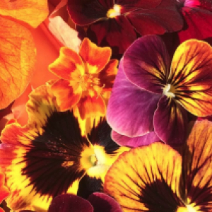 November Edible Flowers